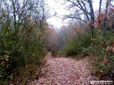 Robledales Riaza-Ermita Hontanares; parque peñalara parque natural montgo parques murcia